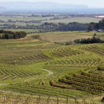 3 régions viticoles à visiter lors d'un séjour œnologique en Australie