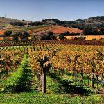 Un voyage viticole à l'américaine