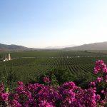 Voyage à travers les vignobles du Mexique