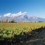 Top 3 des régions à visiter lors d'un voyage œnologique au Chili