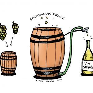 Quoi de neuf avec la fermentation sauvage dans le vin?