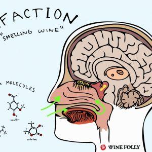 Quelques astuces scientifiques pour vous aider à identifier les arômes du vin