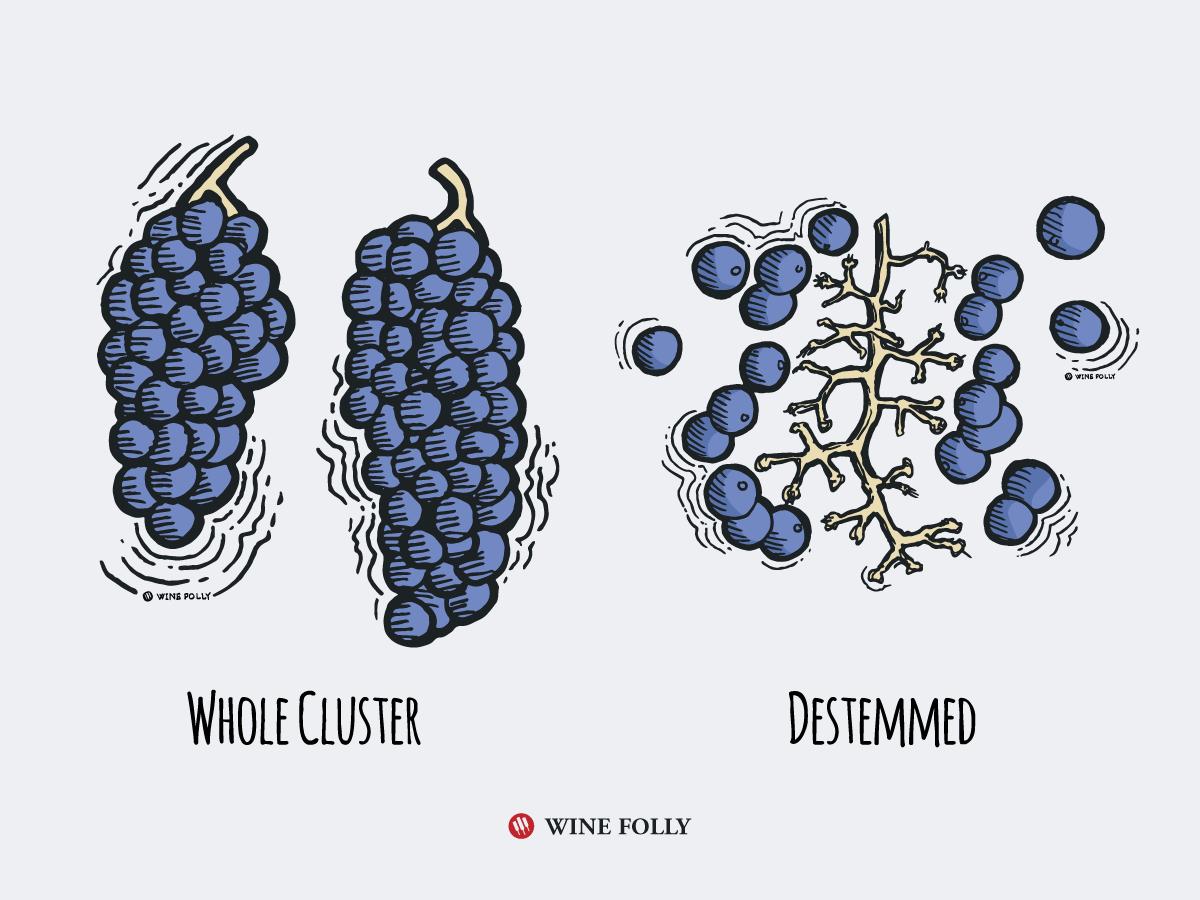 Vins souches? Parlons de la fermentation en grappes entières!